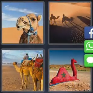 4 Pics 1 Word Morocco August 8 2018 Answers - Answers King